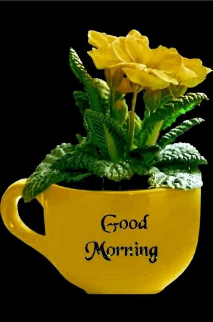 💐విషెస్ GIF - Good Morning - ShareChat
