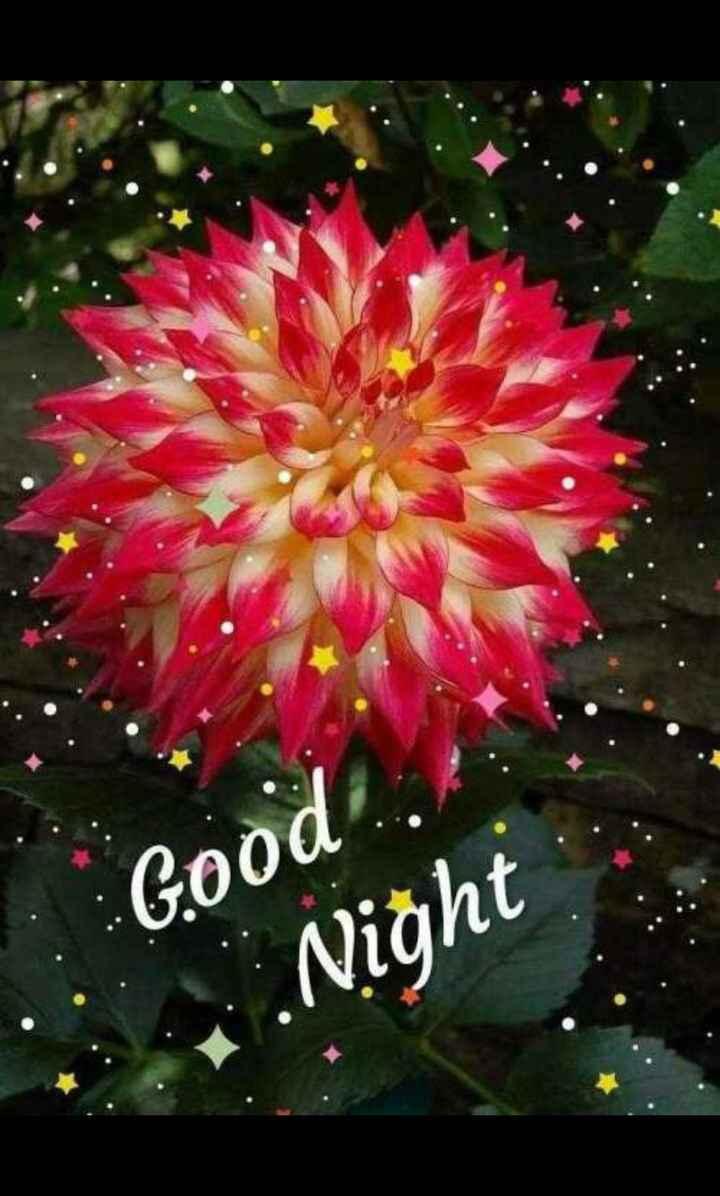 💐విషెస్ GIF - Good Night - ShareChat
