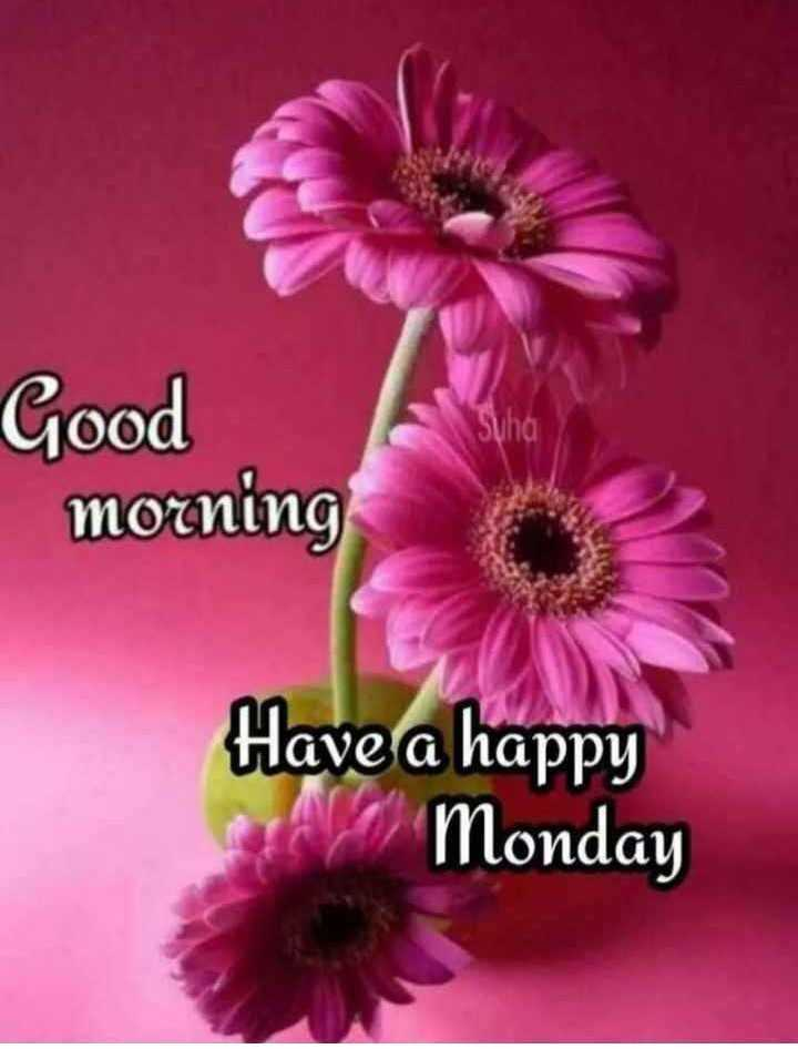 💐విషెస్ GIF - Good morning Have a happy Monday - ShareChat