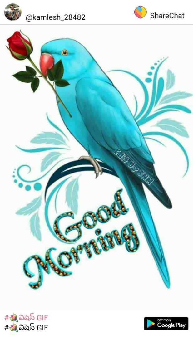 💐విషెస్ GIF - @ kamlesh _ 28482 ShareChat Morning GET IT ON # 325 GIF # 32 . 5 GIF Google Play - ShareChat