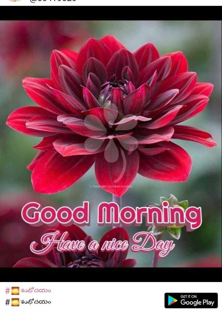 💐విషెస్ GIF - OUTL Good Morning Have a nice Day శుభోదయం busovo GET IT ON # Google Play - ShareChat