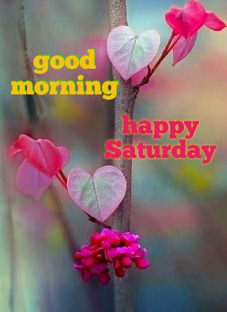 🕉శనివారం స్పెషల్ విషెస్ - good morning Lappy Saturday - ShareChat