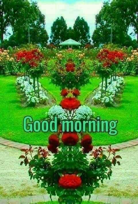 🕉శనివారం స్పెషల్ విషెస్ - Good morning - ShareChat