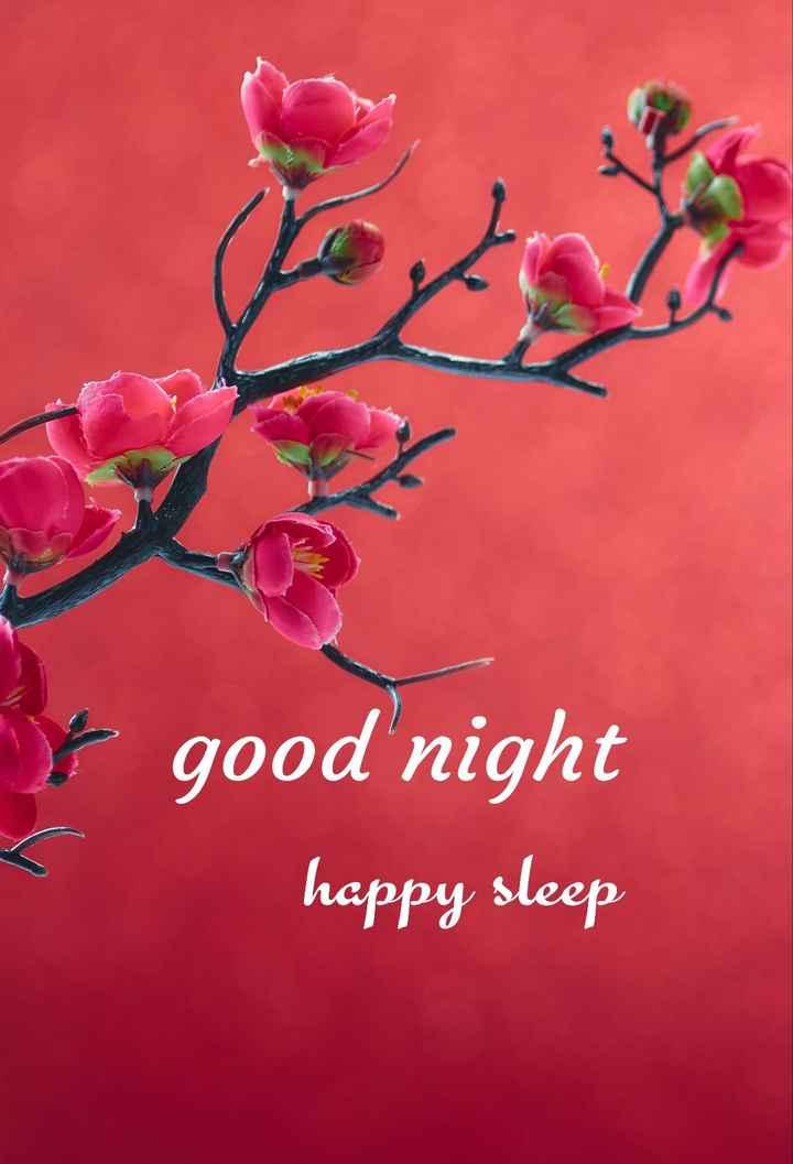 😴శుభరాత్రి - y good night happy sleep - ShareChat