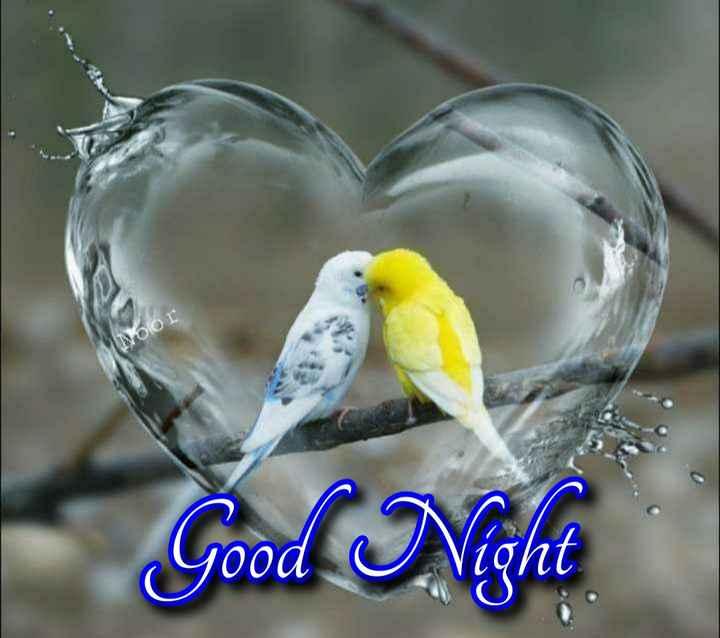 😴శుభరాత్రి - Noor Good Night - ShareChat