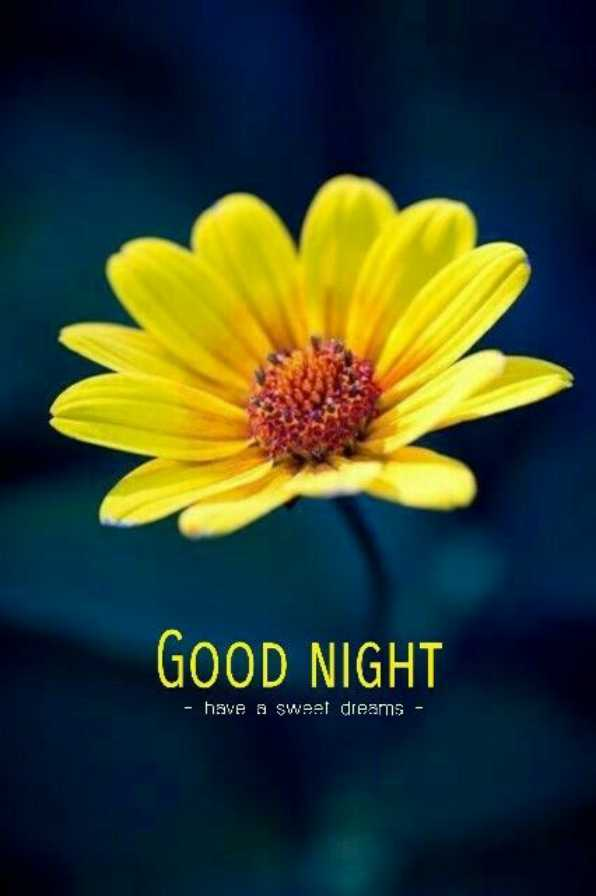 శుభరాత్రి💐💐 - GOOD NIGHT - have a sweet dreams - - ShareChat