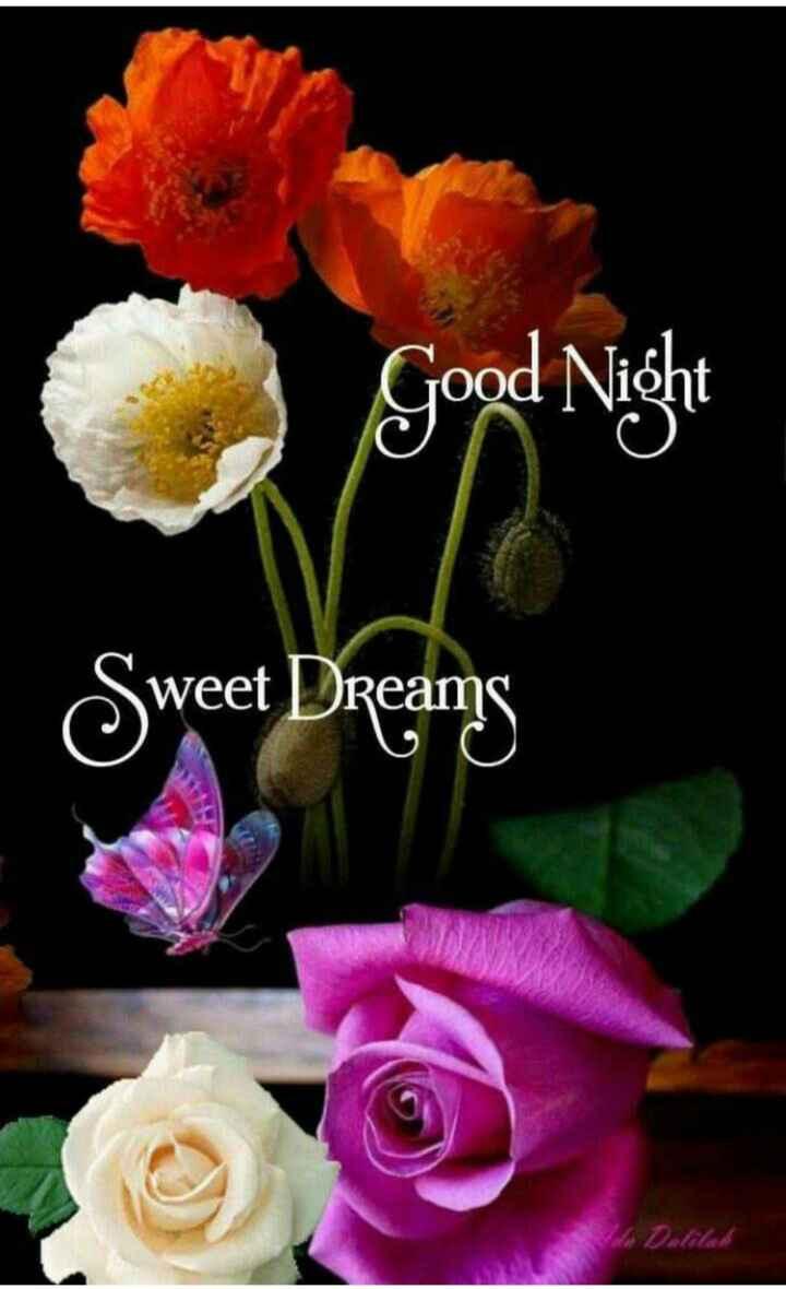 🙏శుభాకాంక్షలు - Good Night TOOC Sweet Dreams - ShareChat