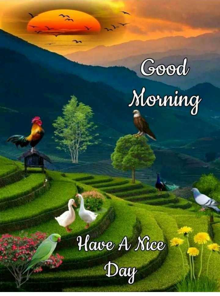 🙏శుభాకాంక్షలు - Good Morning Have A Nice Day - ShareChat
