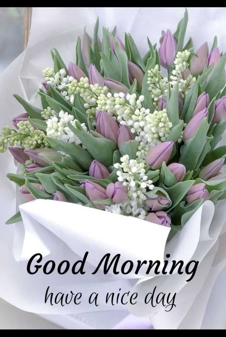🌅శుభోదయం - Good Morning have a nice day - ShareChat