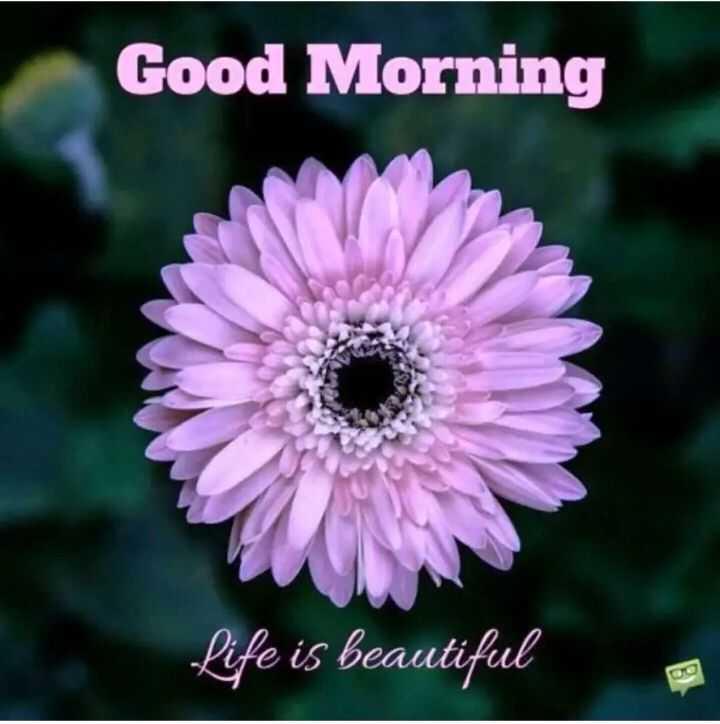 🌅శుభోదయం - Good Morning Life is beautiful - ShareChat