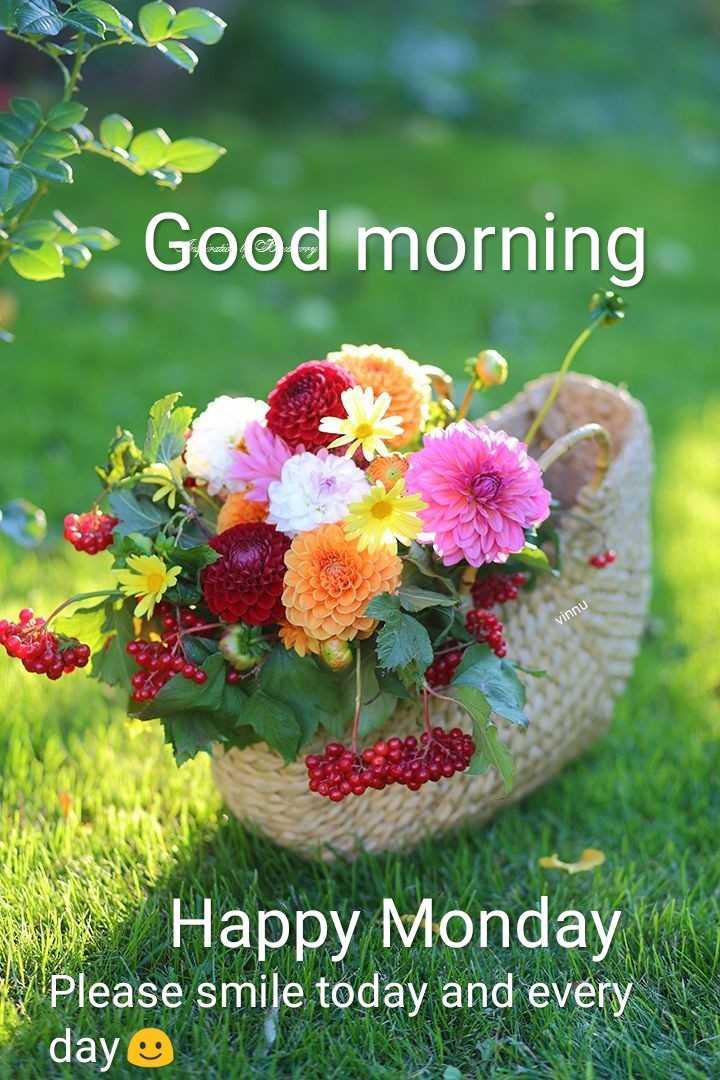 🌅శుభోదయం - - Good morning vinnu Happy Monday Please smile today and every day e - ShareChat