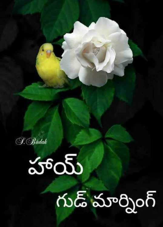 🌅శుభోదయం - S . Budak హాయ్ గుడ్ మార్నింగ్ - ShareChat
