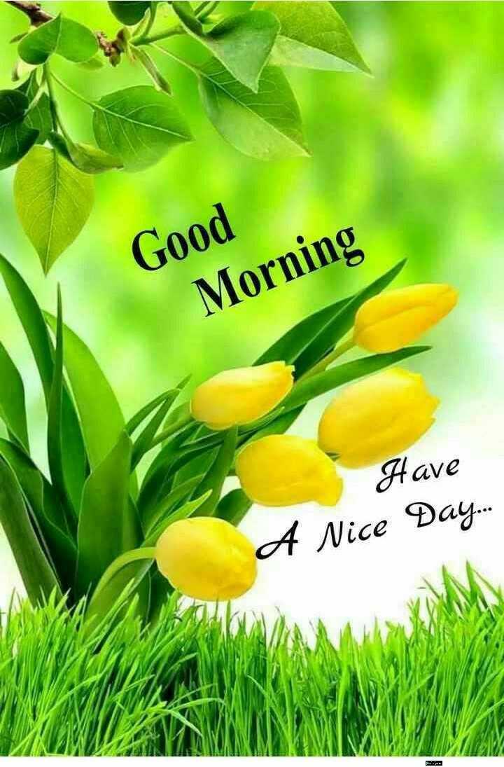 🌅శుభోదయం - Good Morning Have A Nice Day . . . - ShareChat