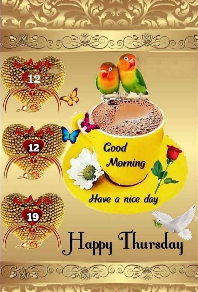 🌅శుభోదయం - CODICENDO Cood Morning Have a nice day ( Happy Thursday - ShareChat