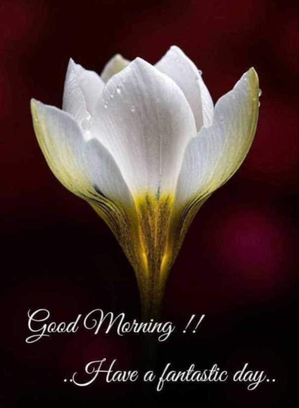 శుభోదయం - Good Morning ! ! . . . Have a fantastic day . . - ShareChat