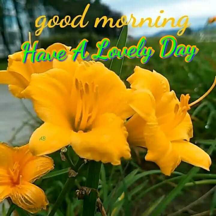 🌅శుభోదయం - good morning Mave A Lovelos Dag - ShareChat