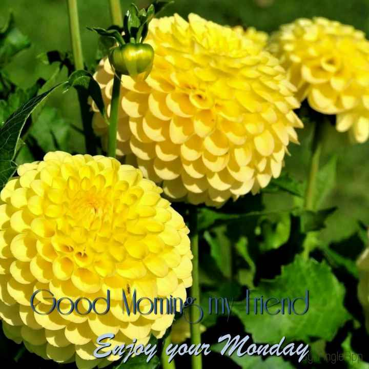 🌅శుభోదయం - Good Momip myliend Enjoy your Monday - ShareChat