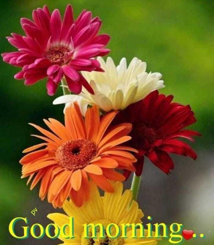 🌅శుభోదయం - Good morning . . . - ShareChat