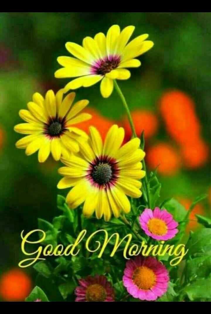 🌅శుభోదయం - X Good Morning - ShareChat