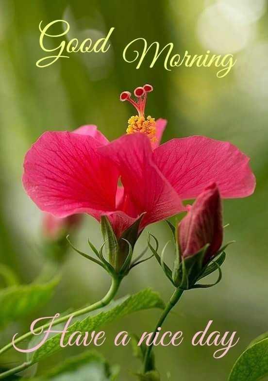 🌅శుభోదయం - Good Morning glave a nice day - ShareChat