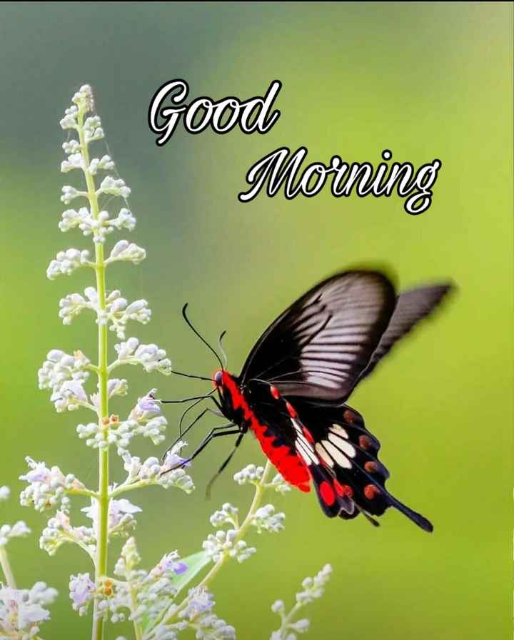 🌅శుభోదయం - Good Morning - ShareChat