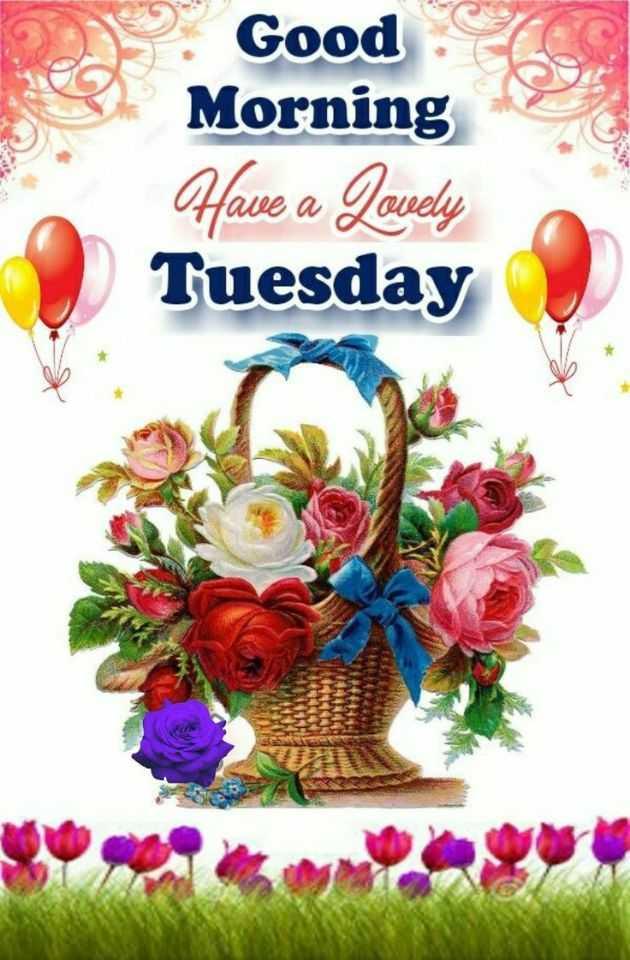 🌅శుభోదయం - B . Good e Morning Have a Lovely Tuesday - ShareChat