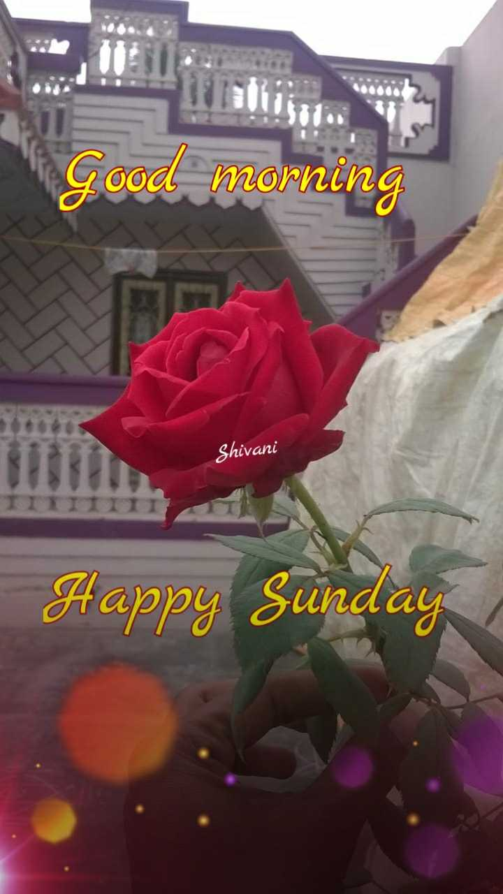 🌅శుభోదయం - Good morning Shivani Happy Sunday - ShareChat
