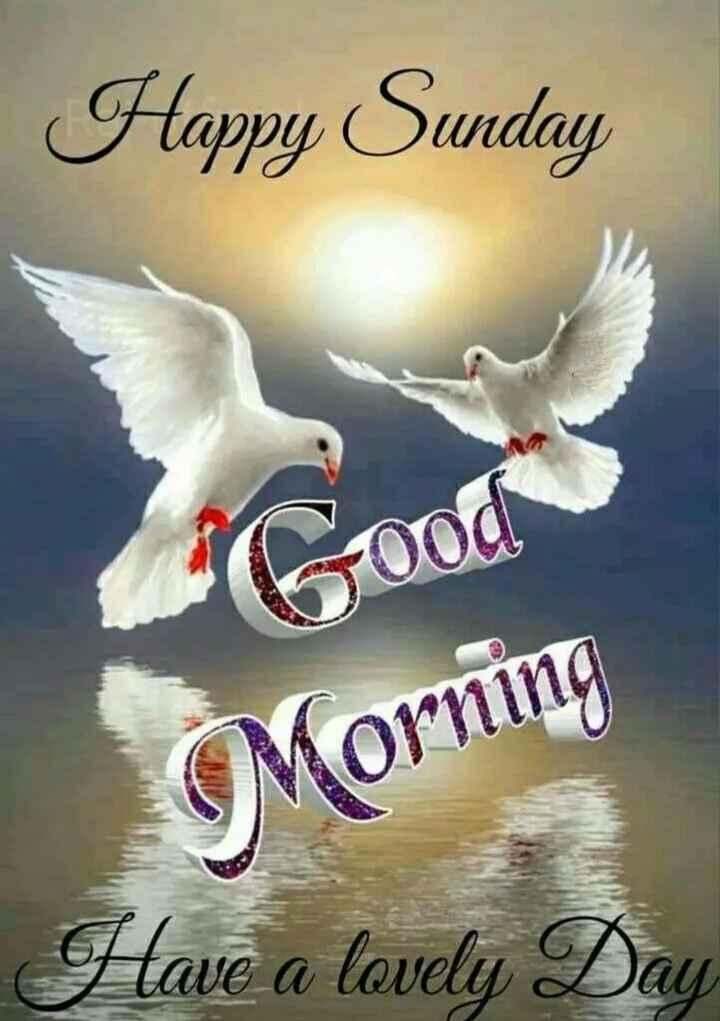 🌅శుభోదయం - Happy Sunday Morning Have a lovely Day - ShareChat