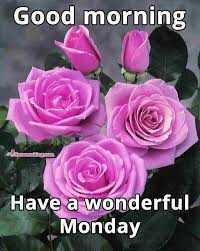 🌅శుభోదయం - Good morning Have a wonderful Monday - ShareChat