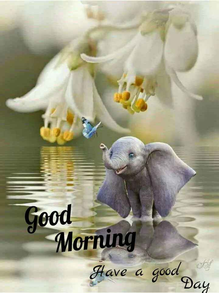 🌅శుభోదయం - Good Morning Have a good day - ShareChat