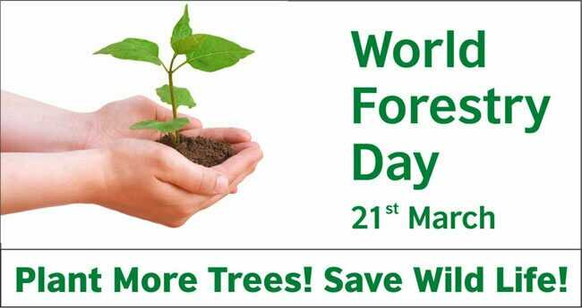 సేవ్ ట్రీస్🙏🙏 - World Forestry Day 21st March Plant More Trees ! Save Wild Life ! - ShareChat