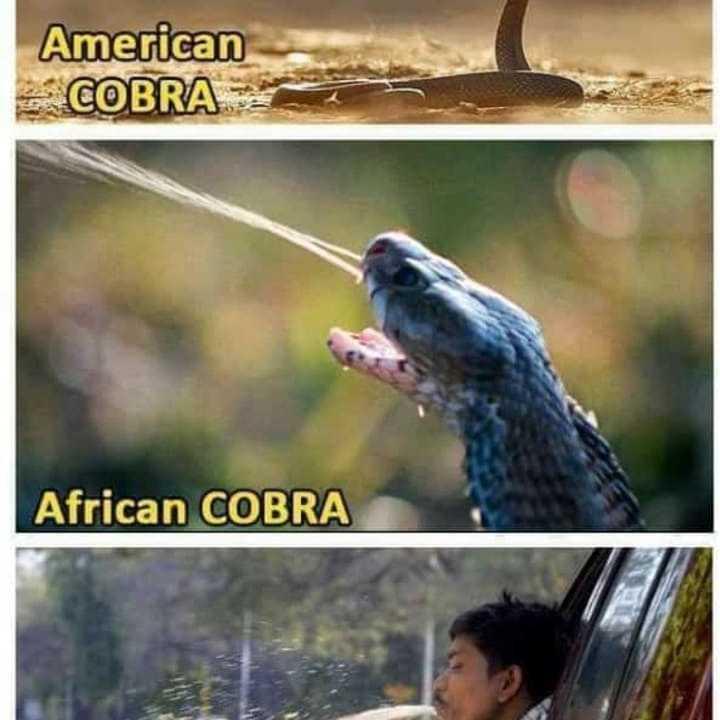 ಆ ದಿನಗಳು - American COBRA African COBRA - ShareChat