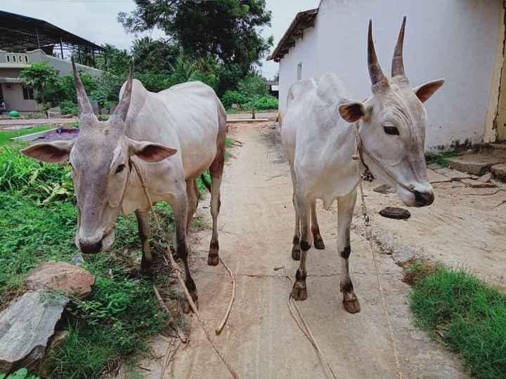👮 ಚಿದಂಬರಂ ಅರೆಸ್ಟ್ - 11 - ShareChat