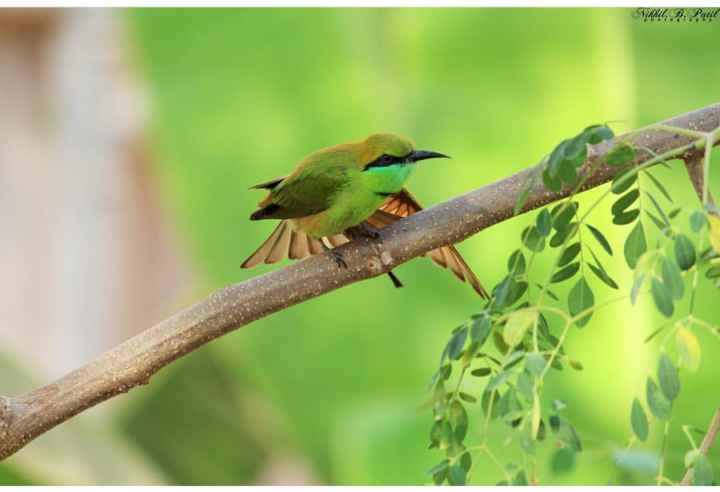 ನನ್ನ photography - Wihhil . B . Patil * * * - ShareChat