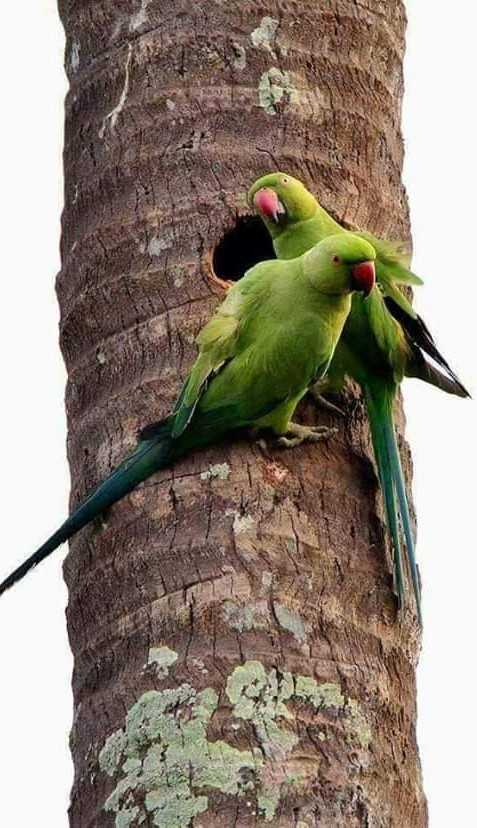 ನನ್ನ photography - ShareChat