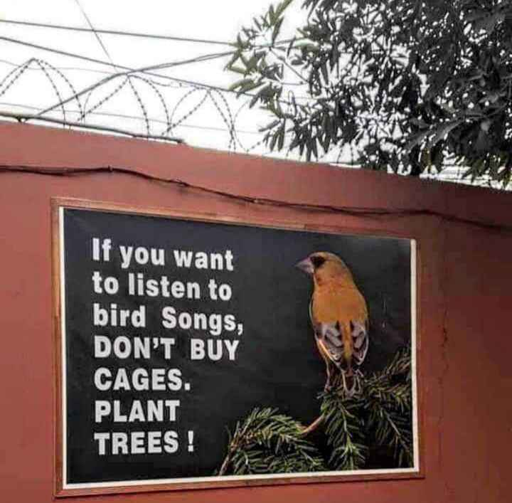 📜 ನುಡಿಮುತ್ತು - If you want to listen to bird Songs , DON ' T BUY CAGES . PLANT TREES ! - ShareChat