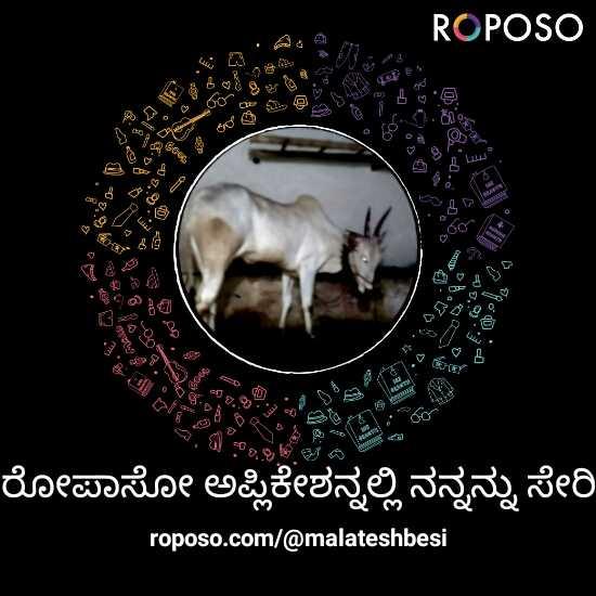 🧨ಪಟ್ ಪಟ್ ಪಟಾಕಿ - ROPOSO ರೋಪಾಸೋ ಅಪ್ಲಿಕೇಶನ್ನಲ್ಲಿ ನನ್ನನ್ನು ಸೇರಿ roposo . com / @ malateshbesi - ShareChat