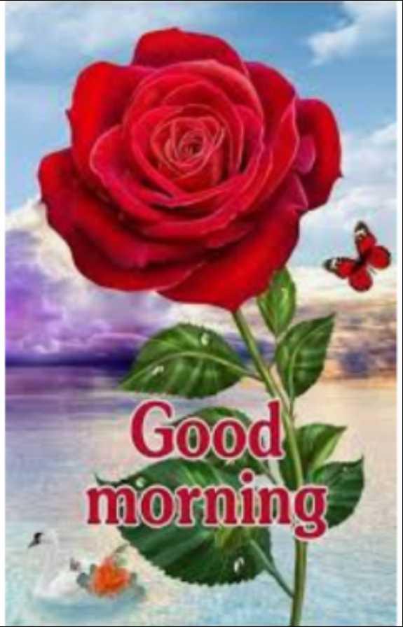 💓ಪ್ರೀತಿ - Good morning - ShareChat