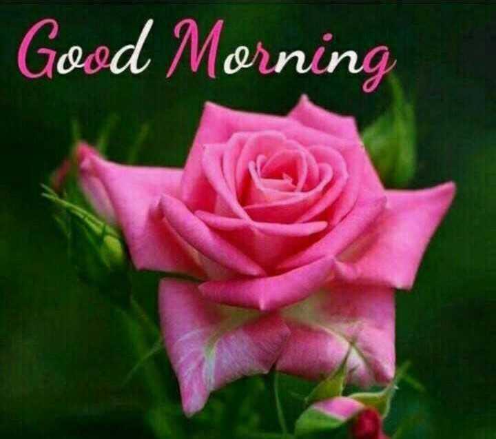 ಬೆಳಗಿನ ಶುಭೋದಯ - Good Morning - ShareChat