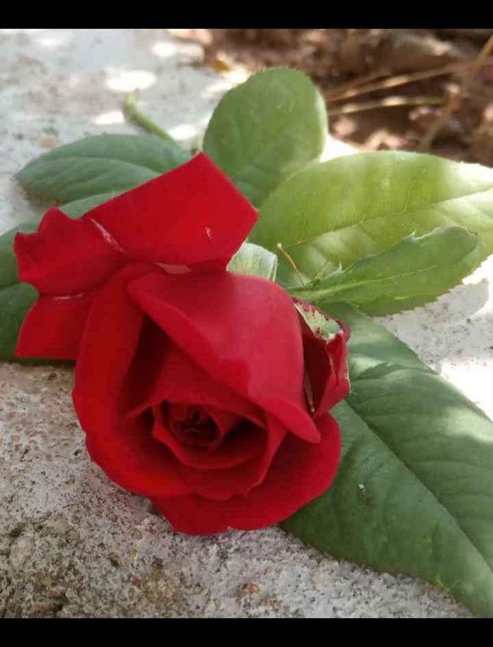 📱 ಮೊಬೈಲ್ ಫೋಟೋಗ್ರಫಿ - ShareChat