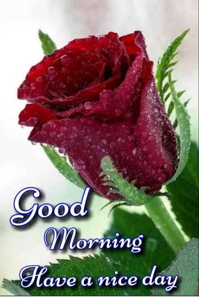 🎁ವಾರ್ಷಿಕೋತ್ಸವ - Good Morning Have a nice day - ShareChat