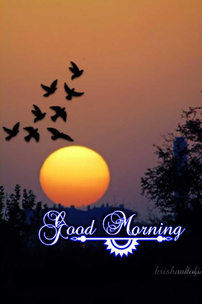 🎁ವಾರ್ಷಿಕೋತ್ಸವ - od Morning krishnakalis - ShareChat