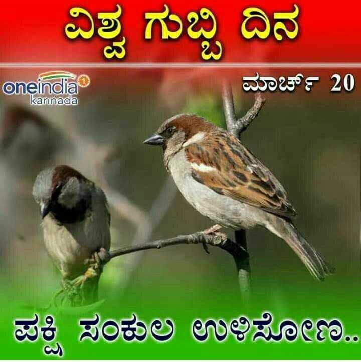 ವಿಶ್ವ ಗುಬ್ಬಿಗಳು ದಿನ - ವಿಶ್ವ ಗುಬ್ಬಿ ದಿನ oneindia ಮಾರ್ಚ್ 20 kannada ಪಕ್ಷಿ ಸಂಕುಲ ಉಳಿಸೋಣ - ShareChat