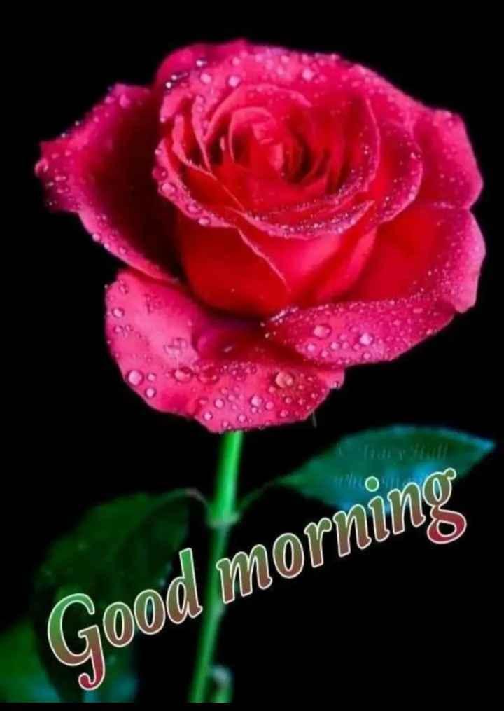 ಶುಭಮುಂಜಾನೆ ನಿಮಗಾಗಿ..🌹 - O Good morning - ShareChat