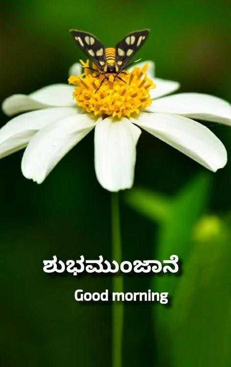ಶುಭಮುಂಜಾನೆ ನಿಮಗಾಗಿ..🌹 - ಶುಭಮುಂಜಾನೆ Good morning - ShareChat