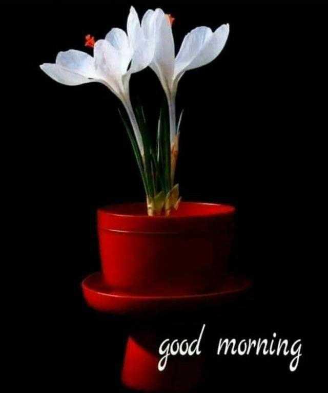 ಶುಭಮುಂಜಾನೆ - good morning - ShareChat