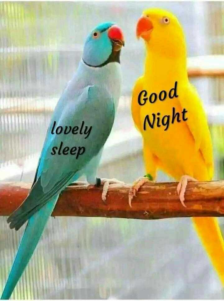 🌃ಶುಭರಾತ್ರಿ - Good Night lovely sleep - ShareChat