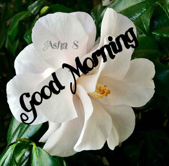 👏ಶುಭಾಶಯಗಳು - Asha s Good Morning - ShareChat