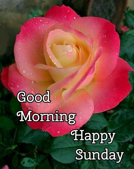 👏ಶುಭಾಶಯಗಳು - Good Morning Happy Sunday - ShareChat