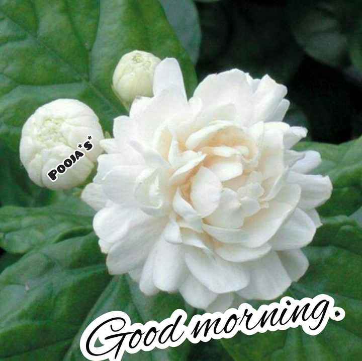 👏ಶುಭಾಶಯಗಳು - POOJA * S * Good morning - ShareChat